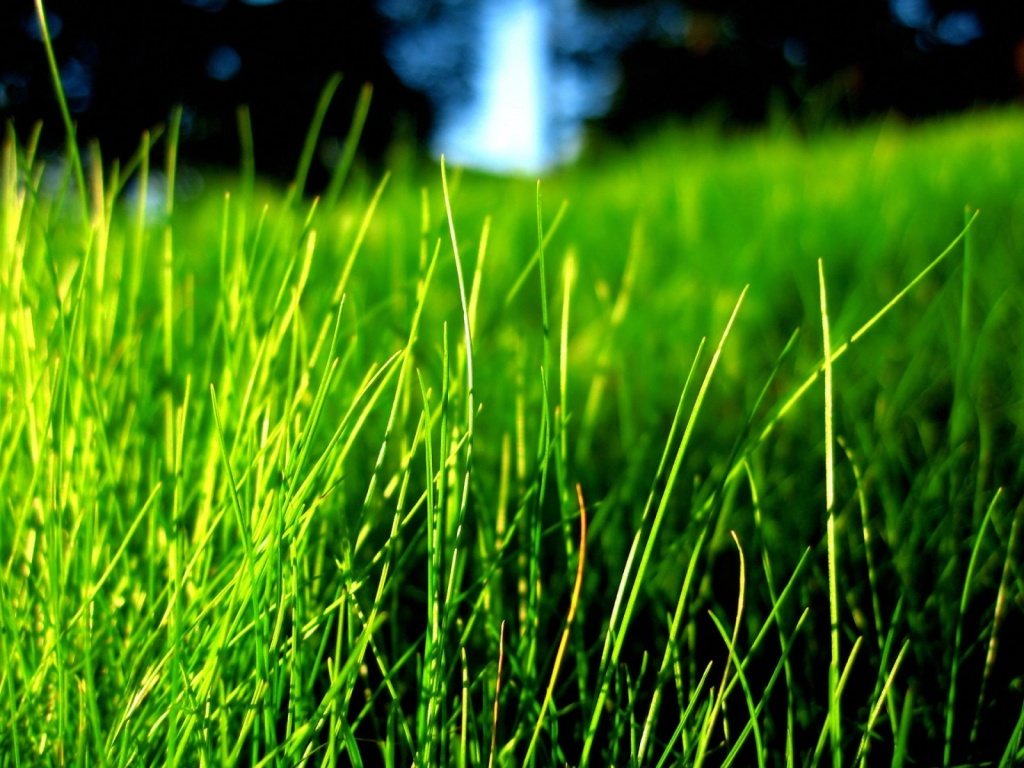best-green-grass-hd-wallpapers-hd-wallpapers-colour-photo-green-hd-wallpaper