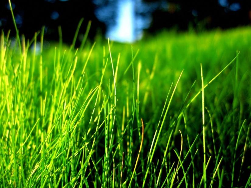 best-green-grass-hd-wallpapers-hd-wallpapers-colour-photo-green-hd-wallpaper