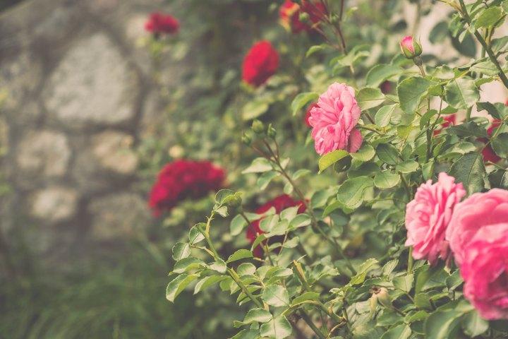on bloom…